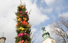 Lipnica Murowana: jest rekord wysokości palmy - 39 metrów i 40 centymetrów