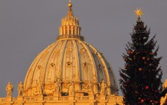 Watykan: w tym roku bożonarodzeniowa choinka z Polski