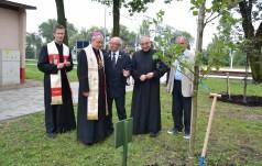 Papieskie drzewa na częstochowskim Stradomiu
