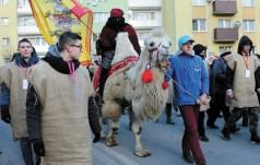 """Rusza konkurs """"Głosuj na wielbłąda"""