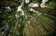 Eksport lasów do Kazachstanu