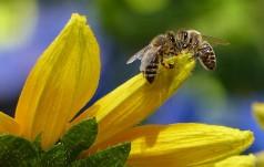 Bliskie spotkania z owadami