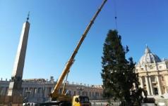 Watykan: na plac św. Piotra dotarła polska choinka