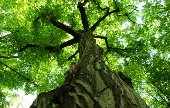 Czy to już koniec Lasów Państwowych w Polsce?