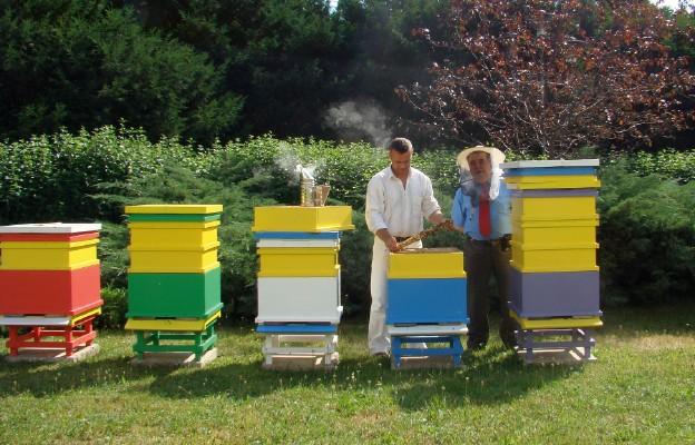 Pszczoły z ulicy Wiejskiej