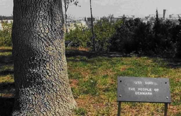Duńskie drzewo pamięci w Yad Vashem