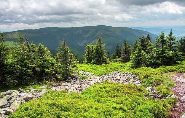 Tatrzański Park Narodowy: Na górskich szlakach dominują zwierzęta