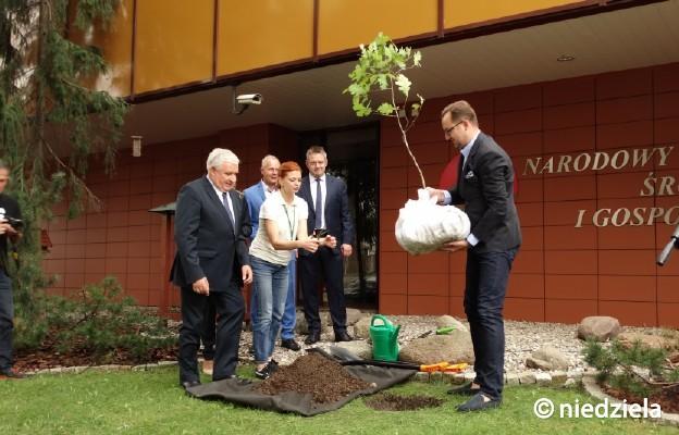 100 tysięcy drzew na 100-lecie niepodległości Polski