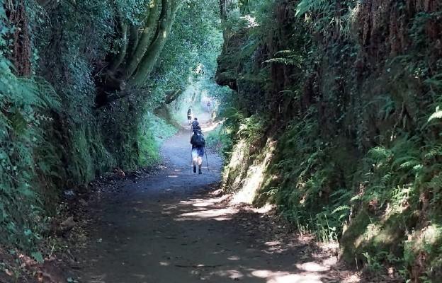 Camino moją radością