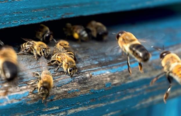 Boże Narodzenie i pszczoły