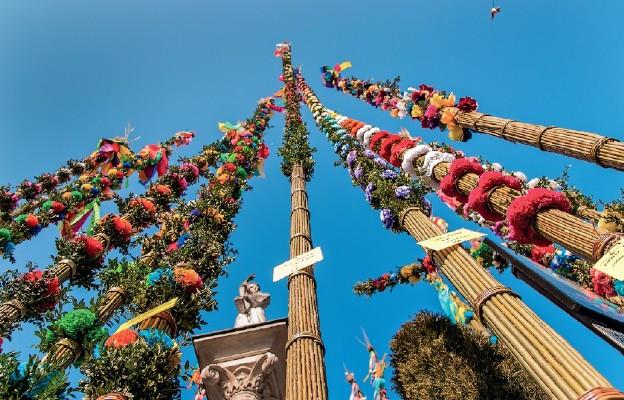 Archidiecezja Krakowska: Akcja #Hosanna - Wyślij nam zdjęcie z palmą. Przekażemy je medykom