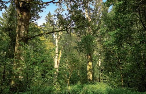 Leśna służba i misja