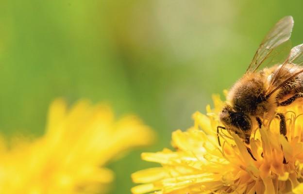 Nie tylko dla pszczelarzy