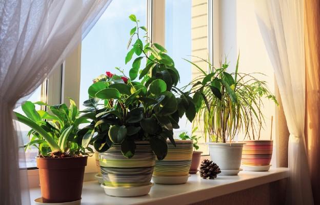 Jak pielęgnować kwiaty doniczkowe zimą?