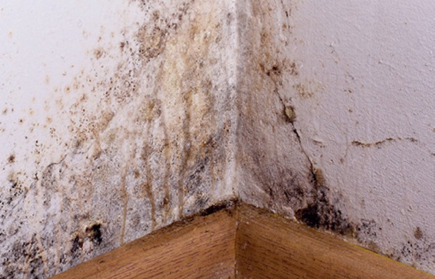 Jak zapobiegać powstawaniu pleśni na ścianie?