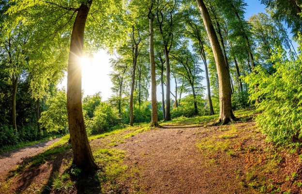 Zdrowy las