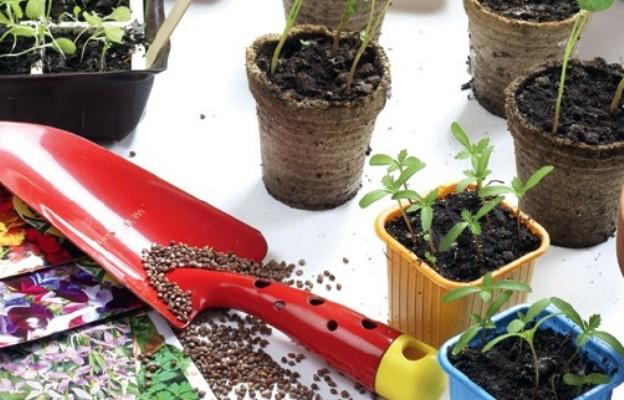 Jak siać warzywa w ogrodzie i do doniczki