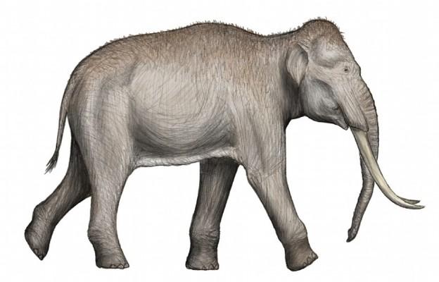 Prehistoryczny słoń leśny
