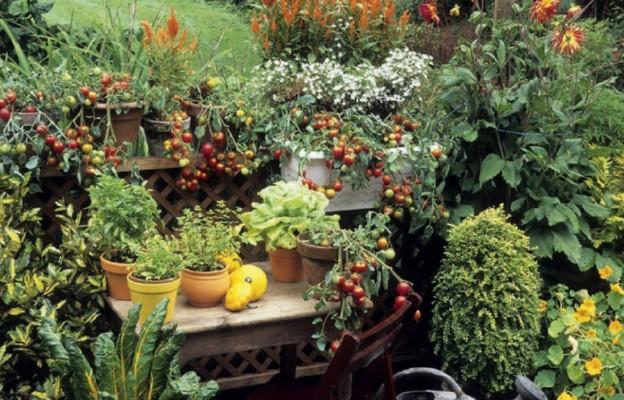 Warzywa i zioła na balkonie