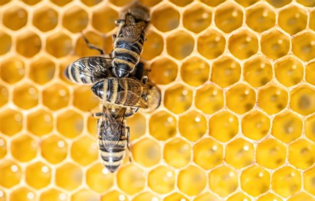 Ratowo: cykl wakacyjnych warsztatów o pszczołach w Ostoi św. Antoniego