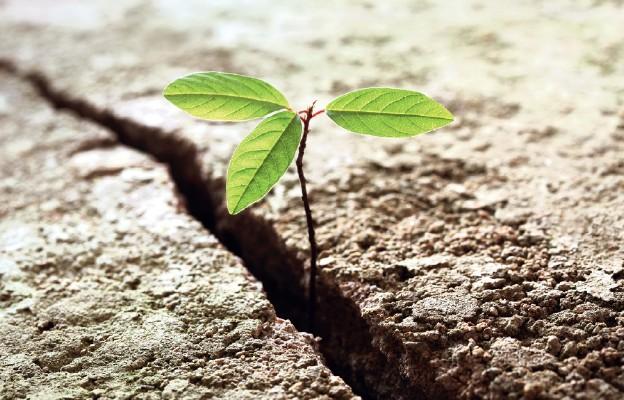 Nadzieja powszechnego zbawienia