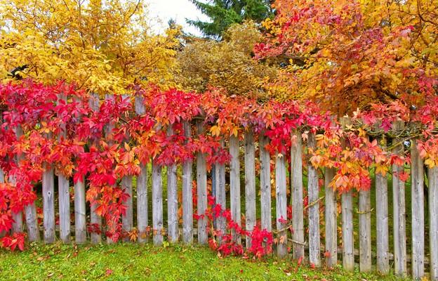 Jesień na balkonie, tarasie i w ogrodzie