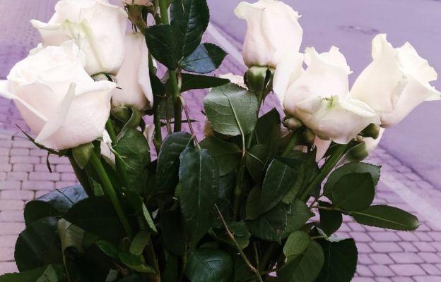 Róże od Ojca Pio