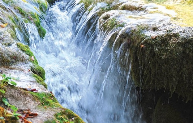 Woda żywa