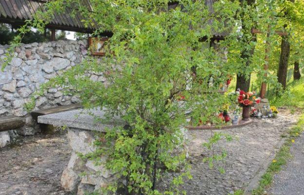 Nawiedzający to miejsce widzą, jak krzew dzikiej róży rośnie na betonowo – kamiennym podłożu